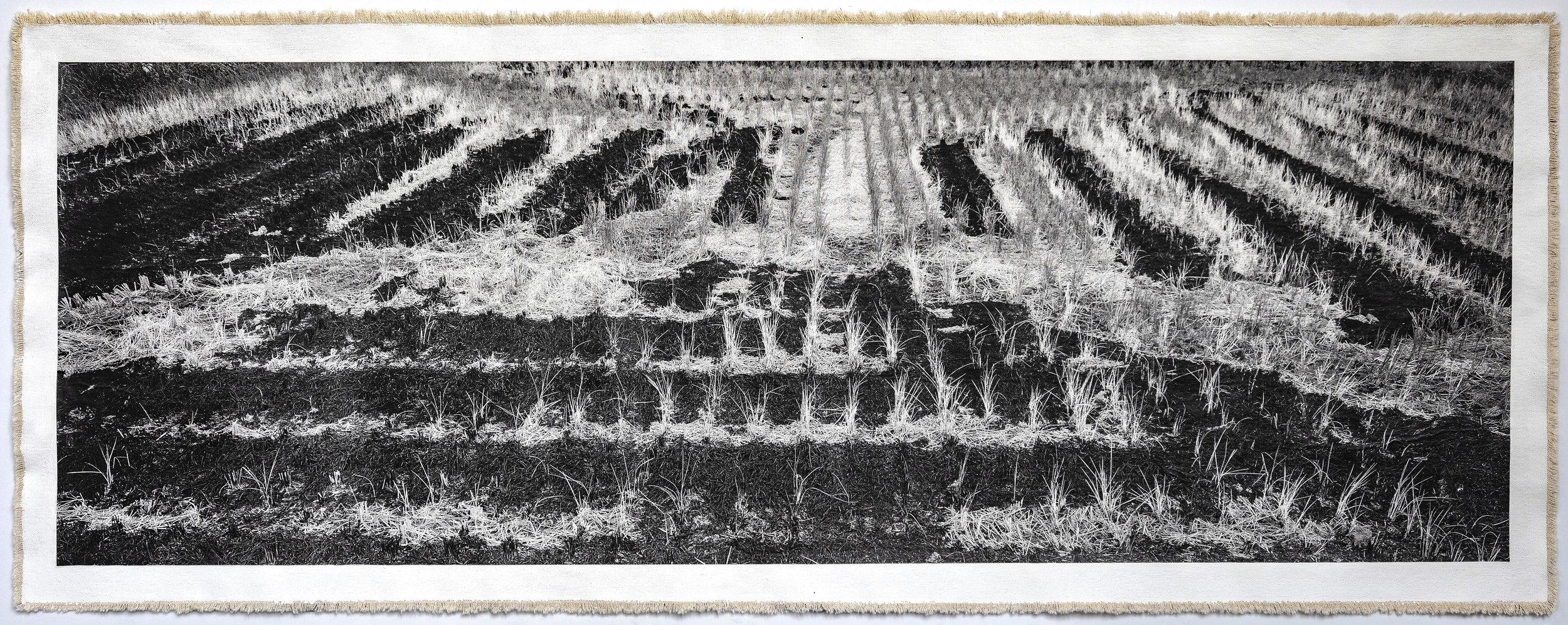 Rice Field, Aso II