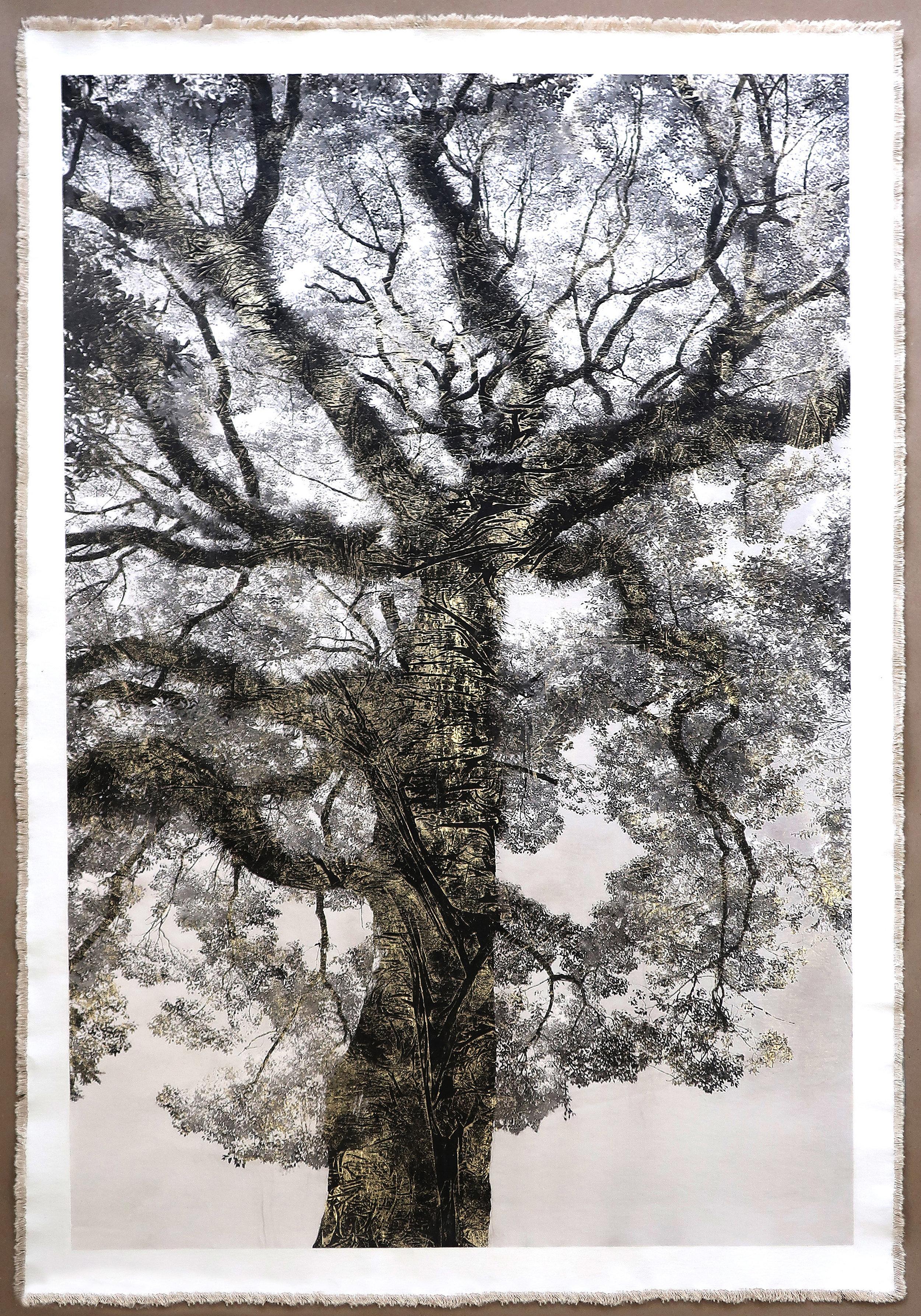 Shofukuji Temple Tree