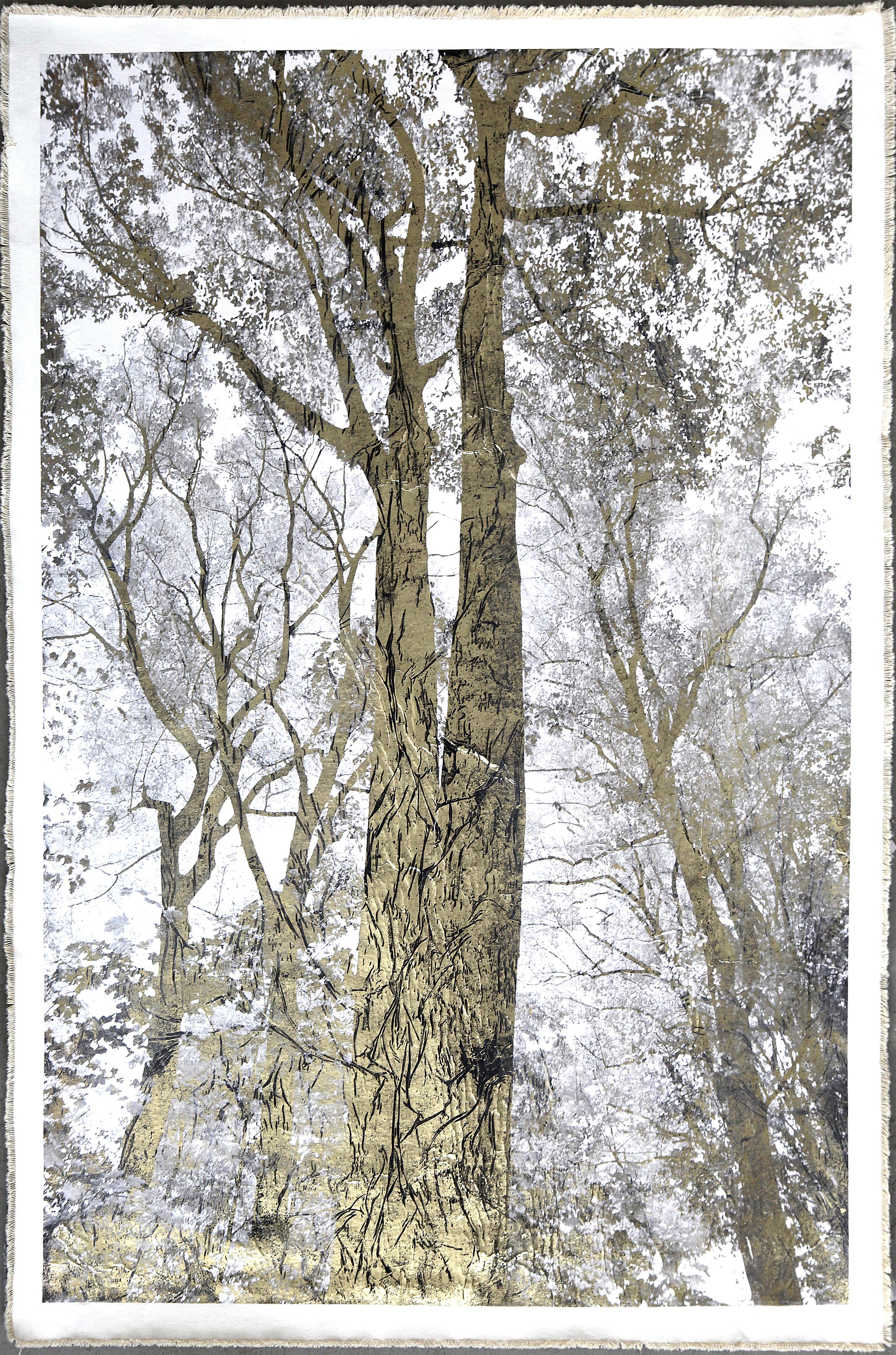 Majestic Oak II positive_34%22 x 50%22 MED RES.jpg