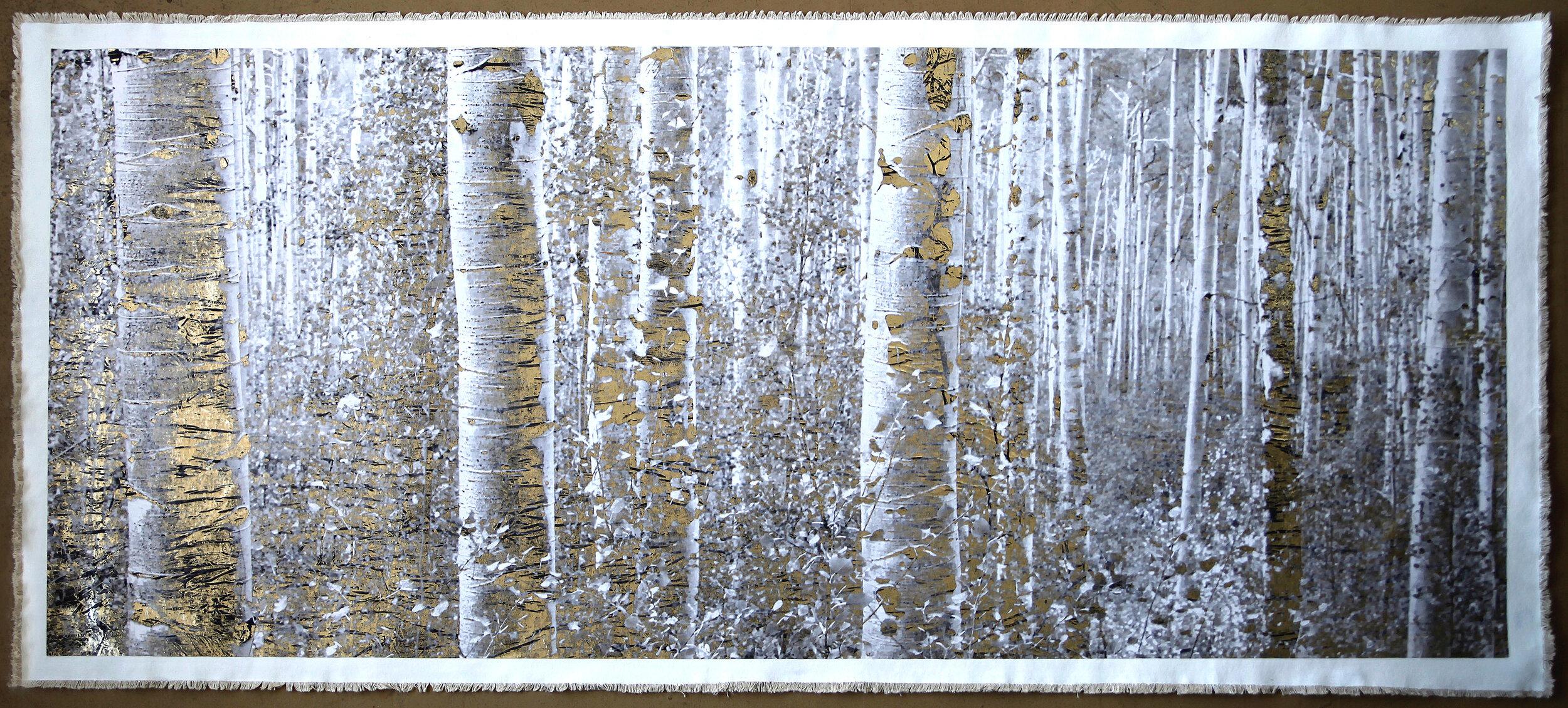 Aspen Forest, Maroon Bells