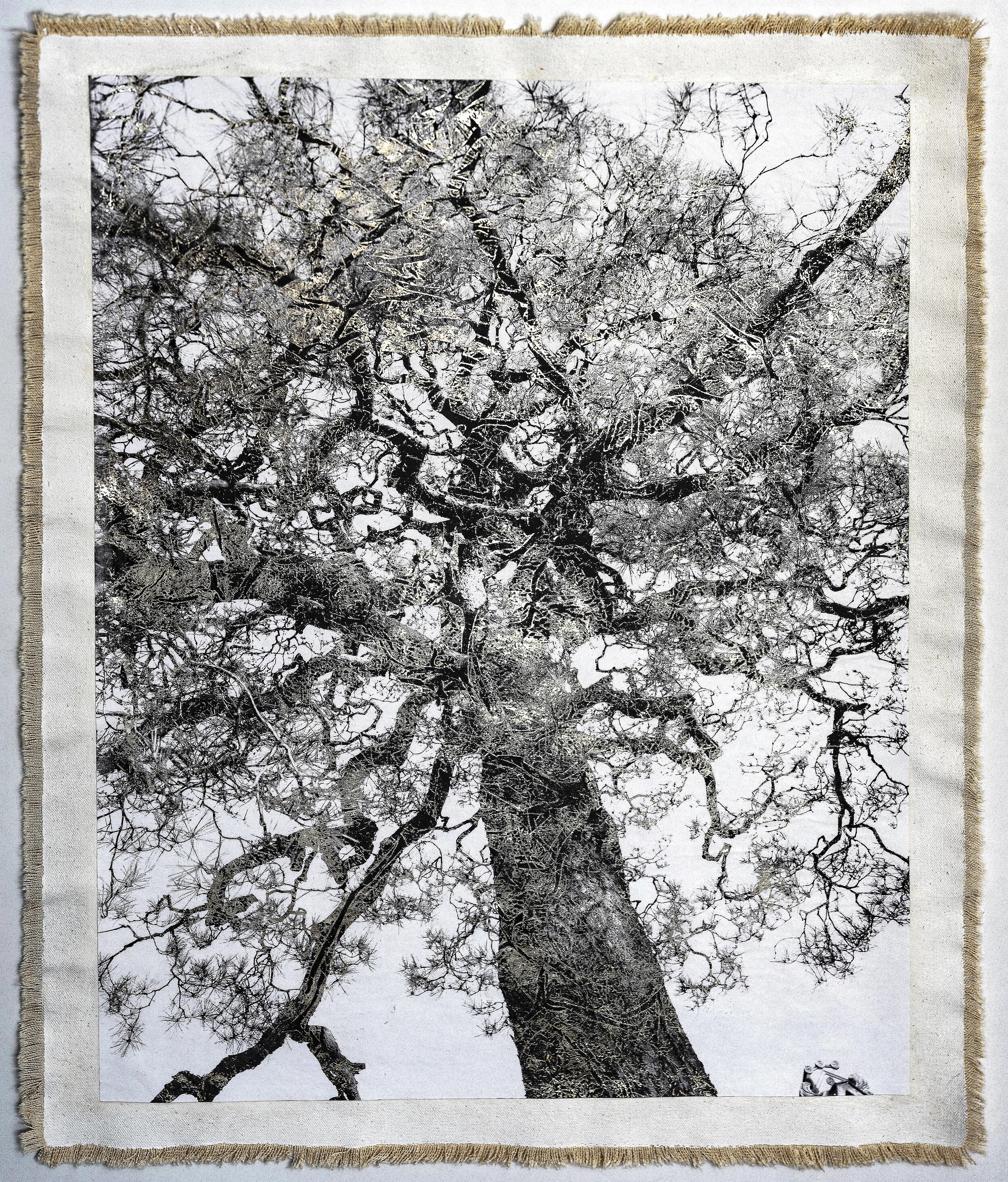 Nanzenji Temple Tree