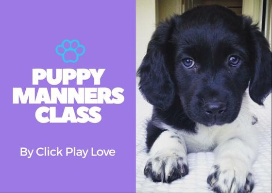 - Our Puppy Manners Class is perfect for people who want to teach their puppy good manners greeting people and other dogs as well as great leash manners, and obedience behaviors. We focus on teaching you and your dog skills for real life situations where your puppy might need some manners. We also have a socialization aspect to this course as well to ensure continued socialization after Puppy Start Right Preschool. If you want to raise a well mannered, easy going dog, this class is for you! Includes: * 1 Puppy Parent Orientation *7 Puppy Manners Classes *Homework Guide * Clicker *FB Support GroupNeed some private lessons or plan to take both Puppy Start Right & Puppy Manners? Check out our Puppy Packages below.Price $220