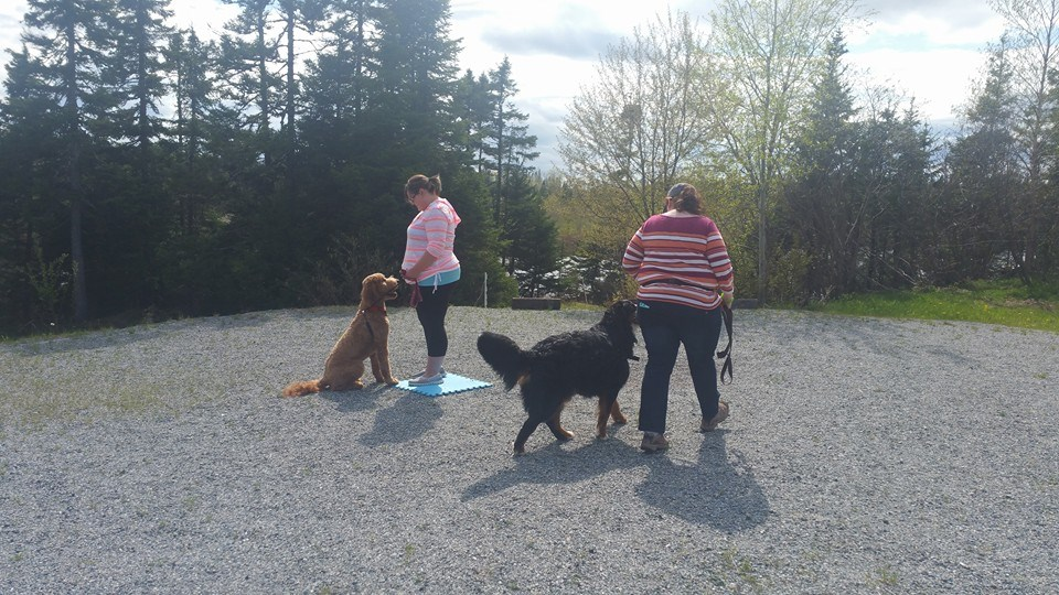 Advanced Classes - We offer specialty and advanced classes in obedience as well as out and about classes geared towards building leash skills, dog manners and great recalls!