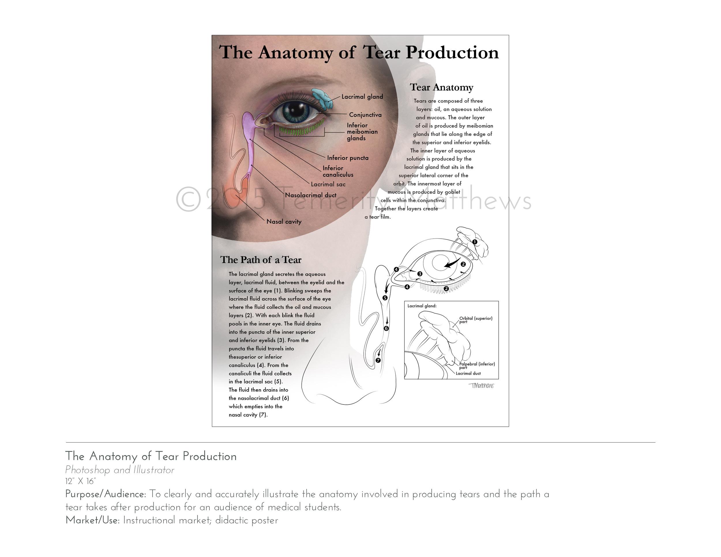 tearproductionweb2.jpg