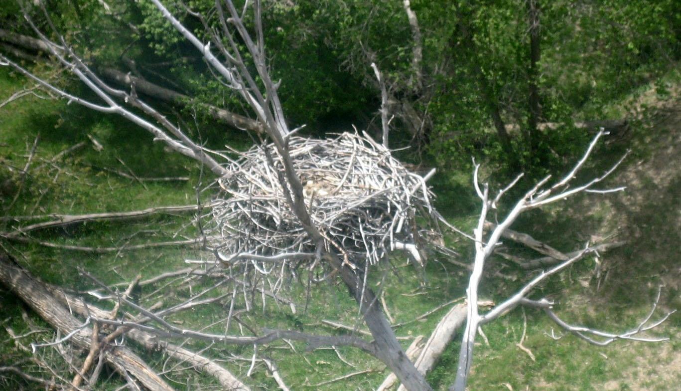 Raptor Nest_1.jpg