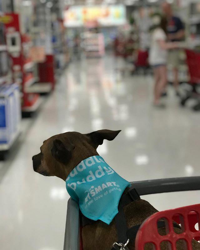 @kisakisadogg is being cute at the Target again 🎯 #kisagram #kisaemotions #dogstagram #dogsofinstagram