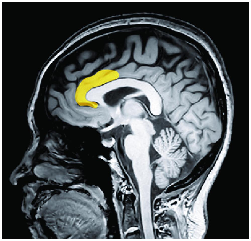 inside the head of a collectorArtboard 11.jpg
