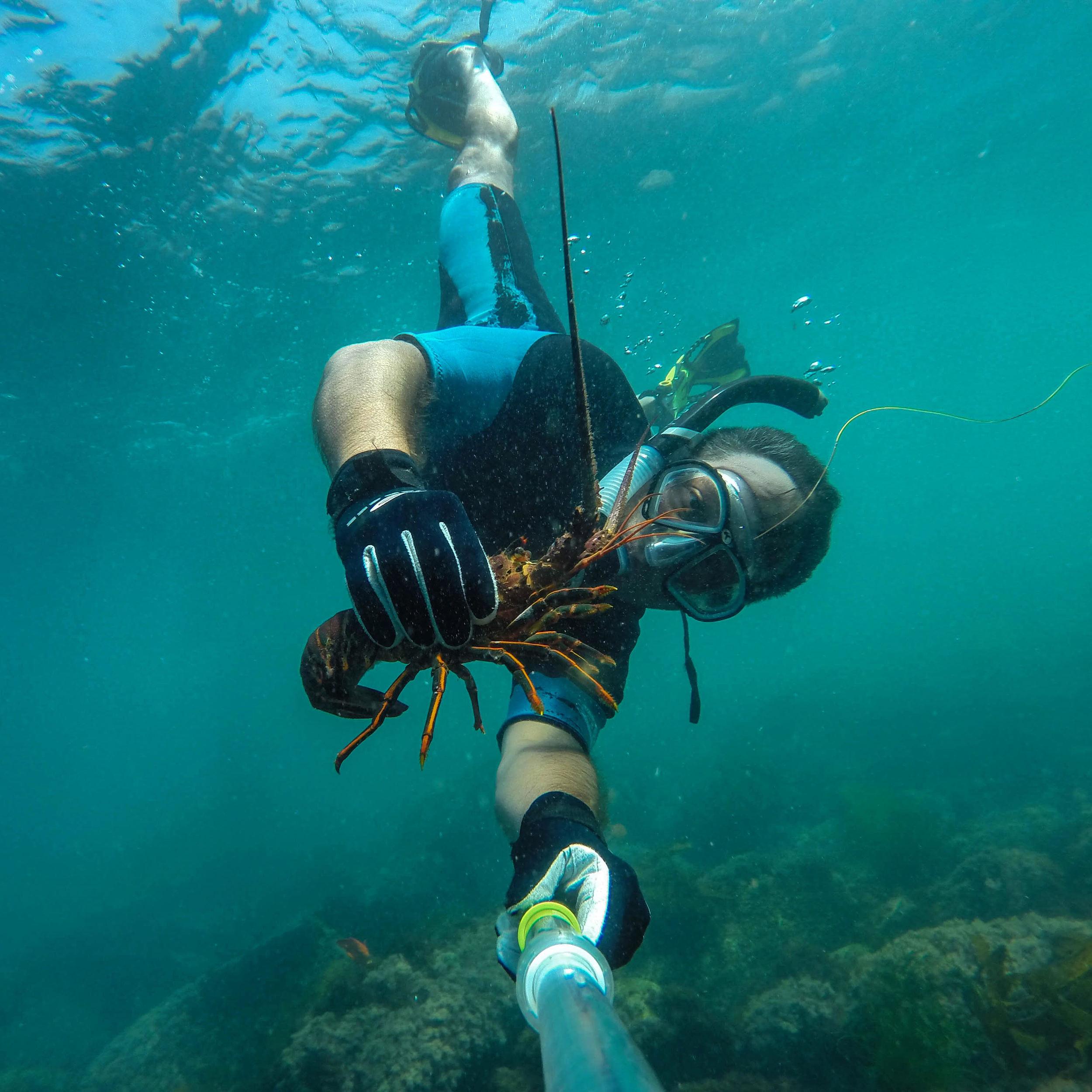 snorkeling for lobster