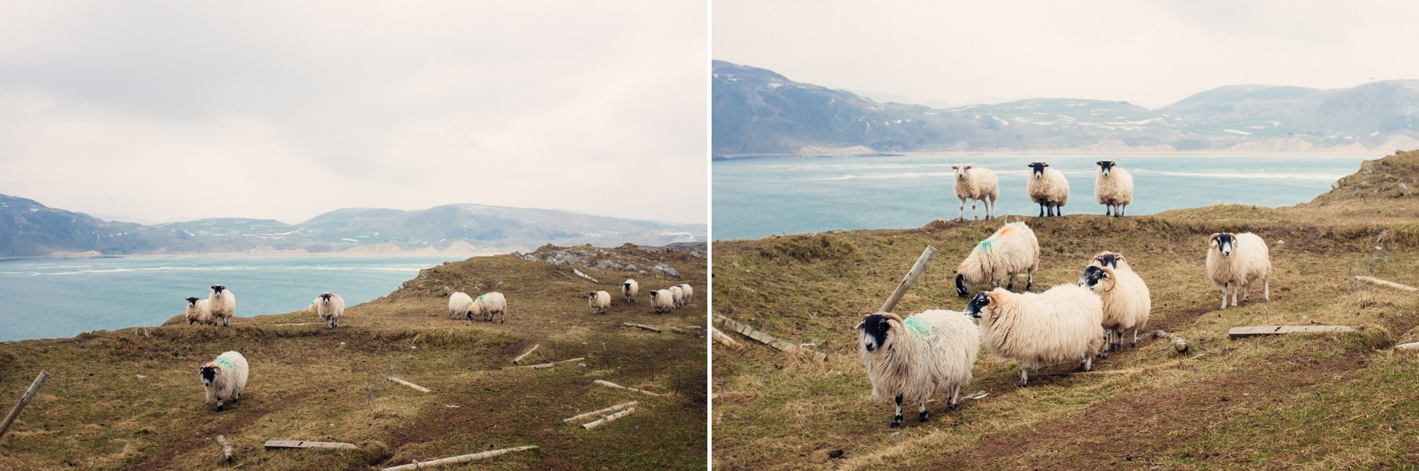 Isle of Doagh 5.jpg