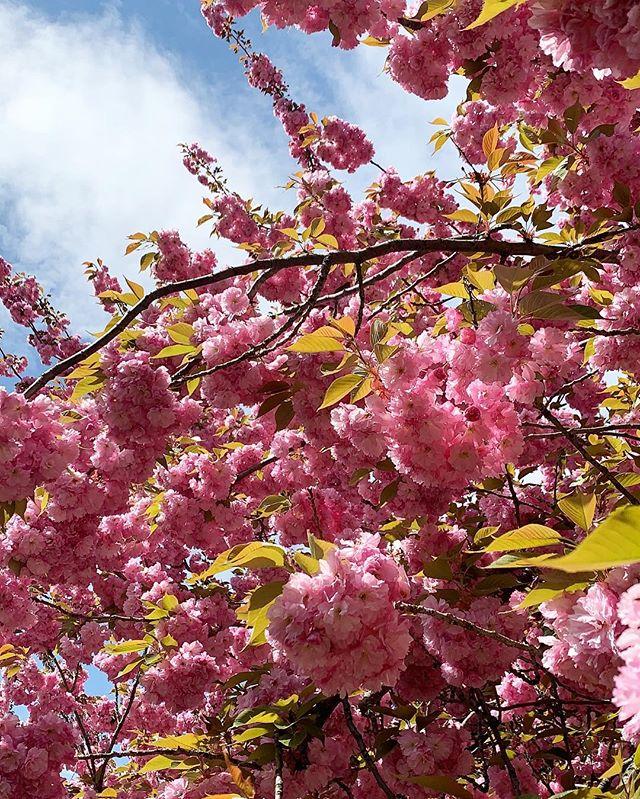 Welcoming spring 🌸☀️🌱#brooklynbotanicalgarden #sakura #brooklyn #spring