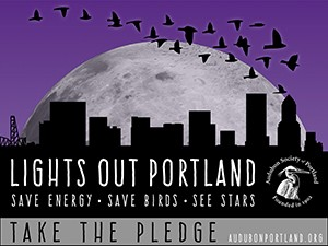 Light Out Portland image_preview.jpeg