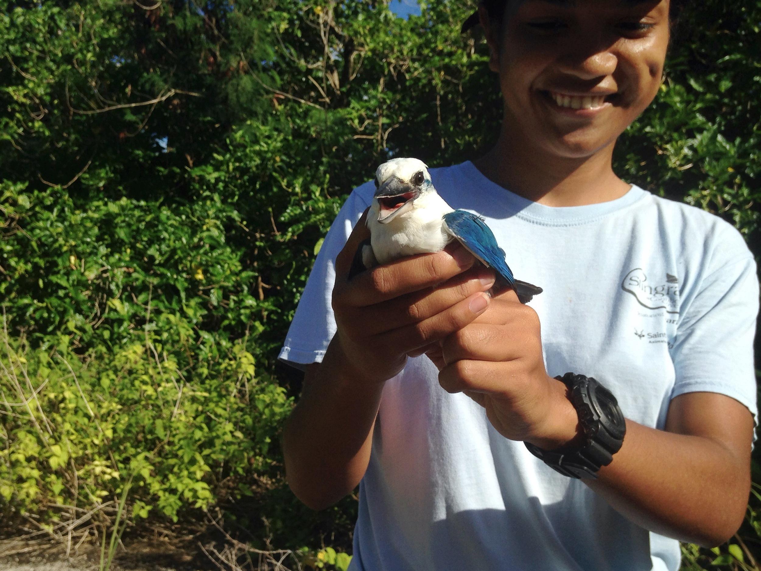 Reba and a collared kingfisher
