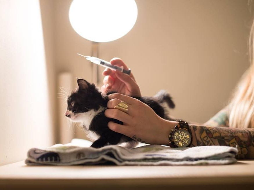 Riff receiving plasma therapy to fight Fading Kitten Syndrome.