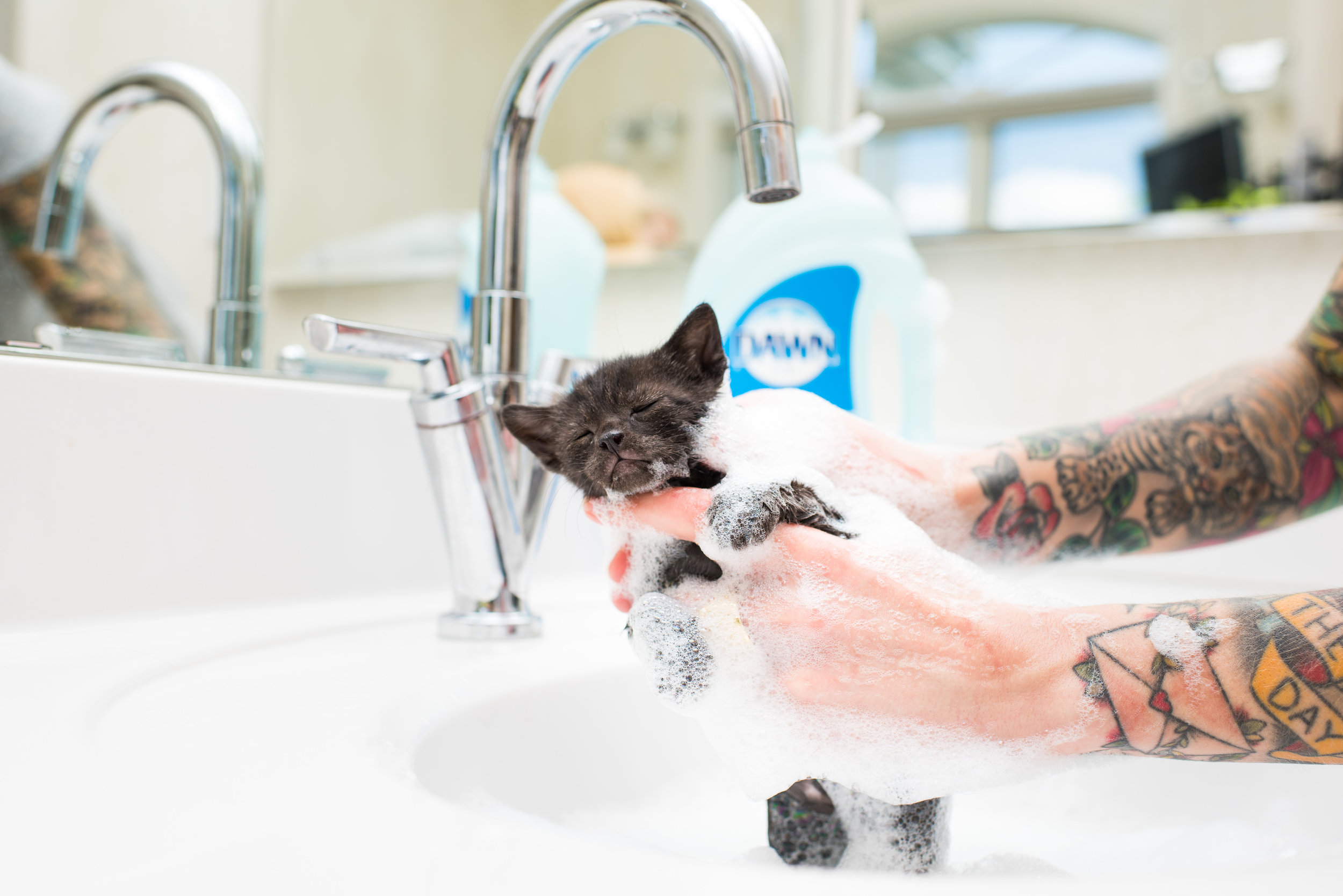 Neonatal kittens can't receive topical flea treatment. Instead, kill the fleas by carefully washing the kitten with unscented dish liquid.