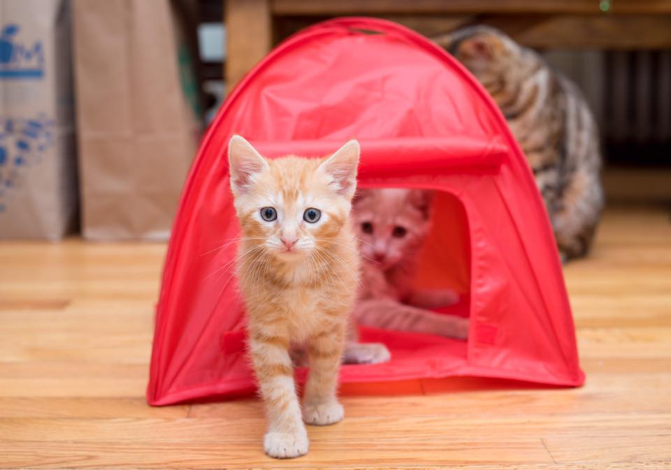 Is this tent big enough for two?