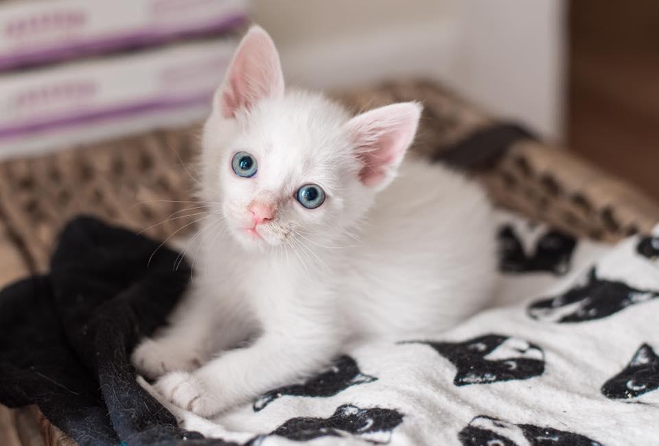 A polar bear cub or a kitten?
