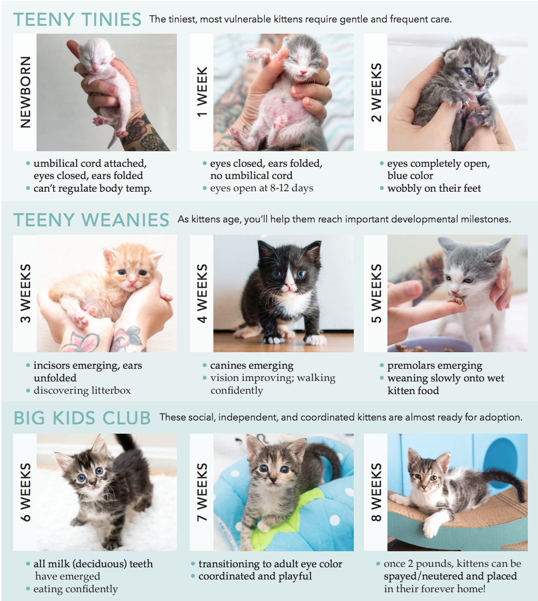 How To Determine A Kitten S Age Kitten Lady