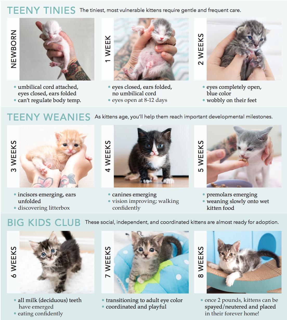 Assessing kittens worksheet - Hannah Shaw