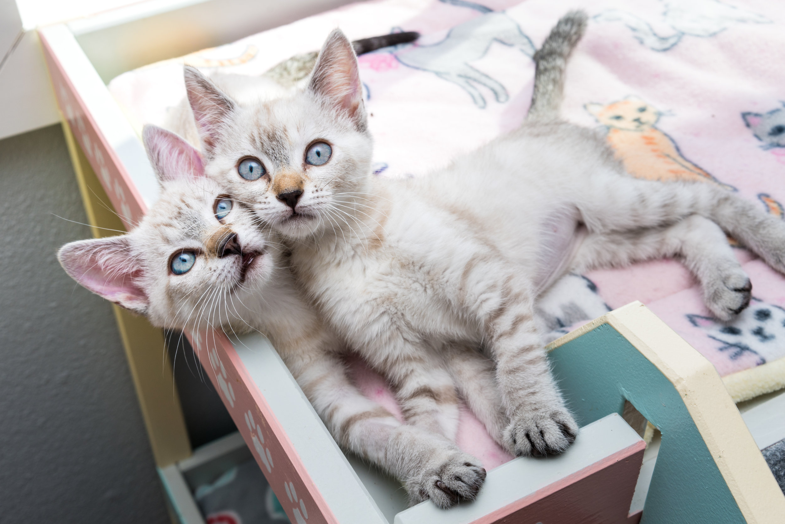 Sweet sisters Sunbeam and Fairy have been together since birth, and now that they've been adopted together, they'll be best friends for life!