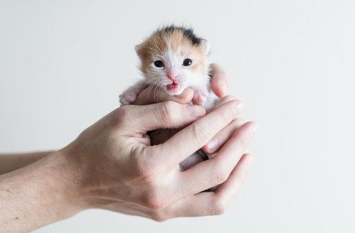 How To Determine A Kitten S Age Kitten Lady