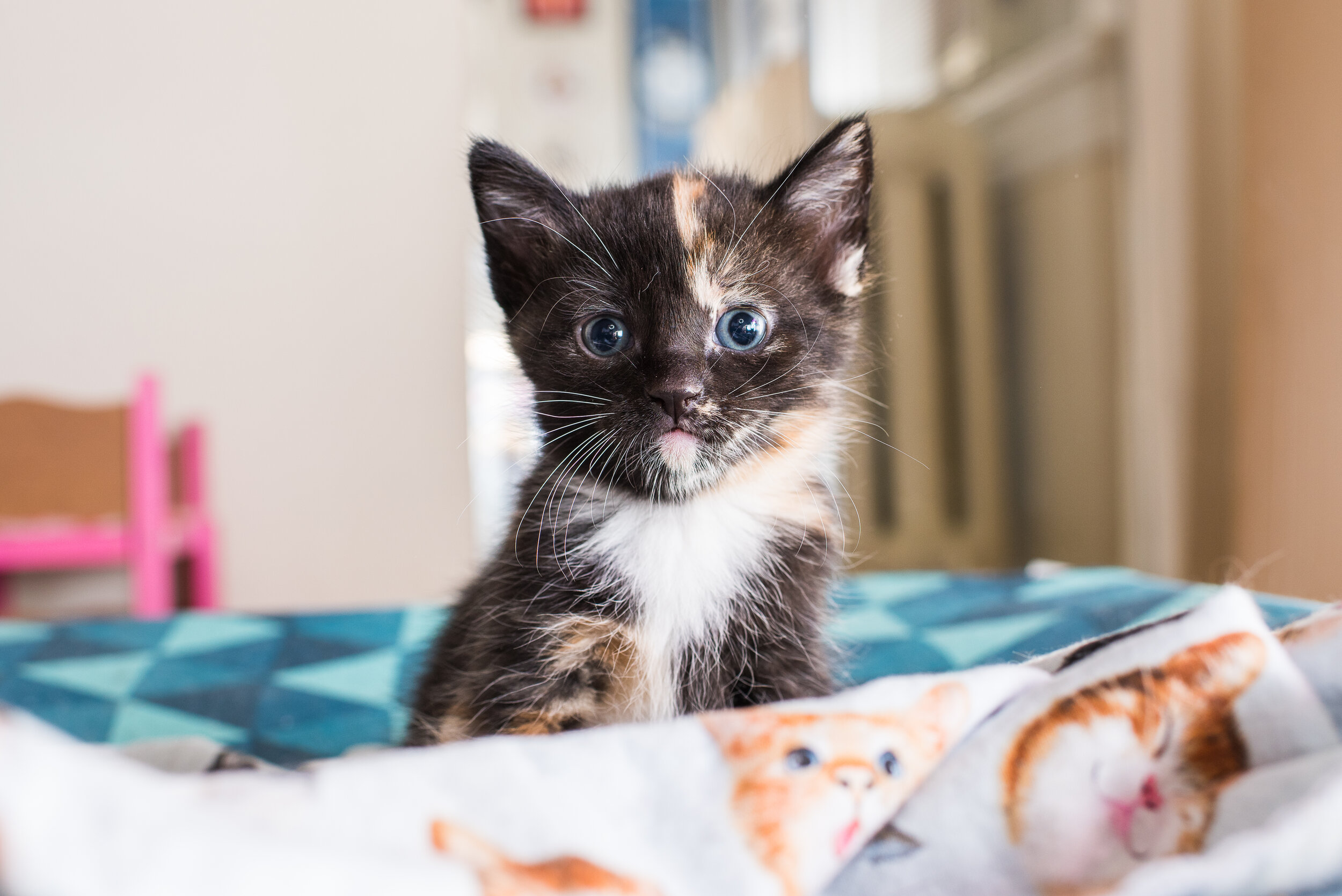 Advertising Kitten Lady