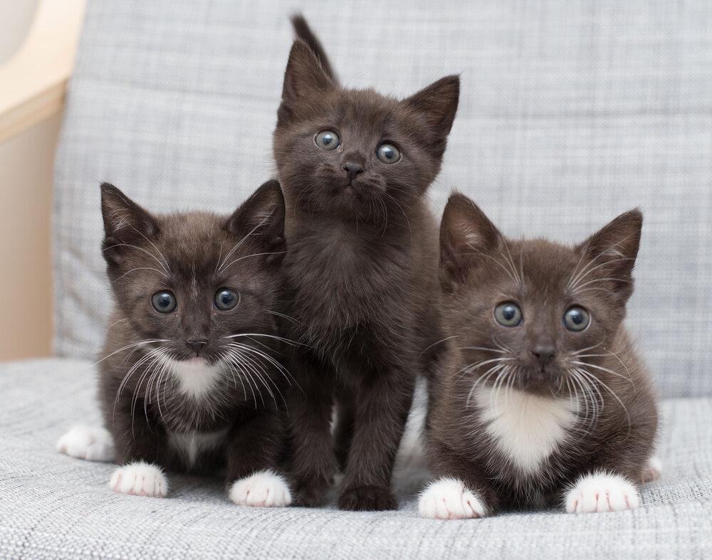 Fostering 101 Kitten Lady