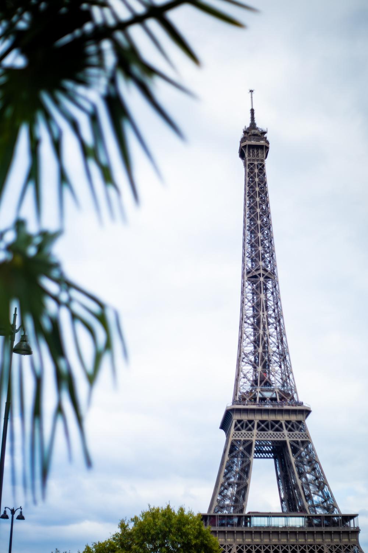 Eiffel Tower Palms.jpg