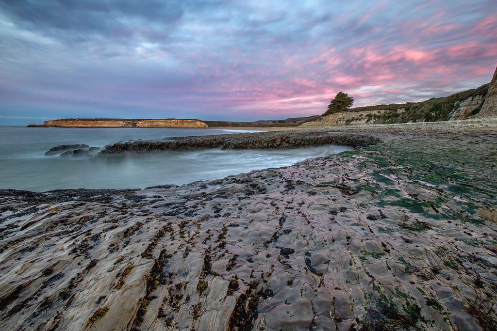 Santa Cruz Pink Dawn