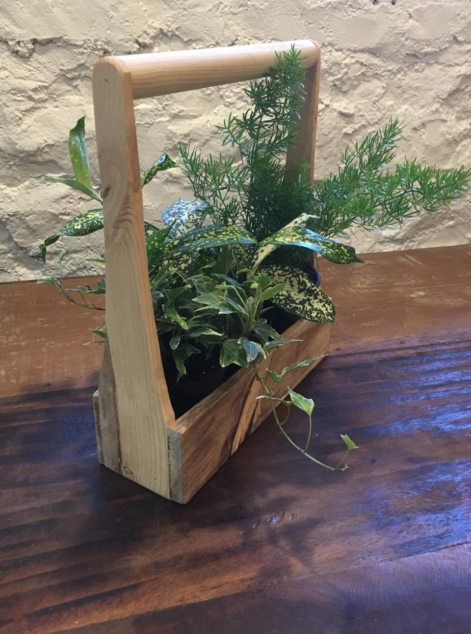 Beetle kill pine caddy - $25