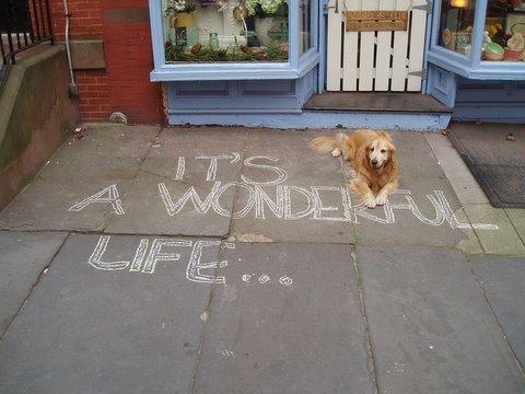 beary, its a wonderful life (2).jpg