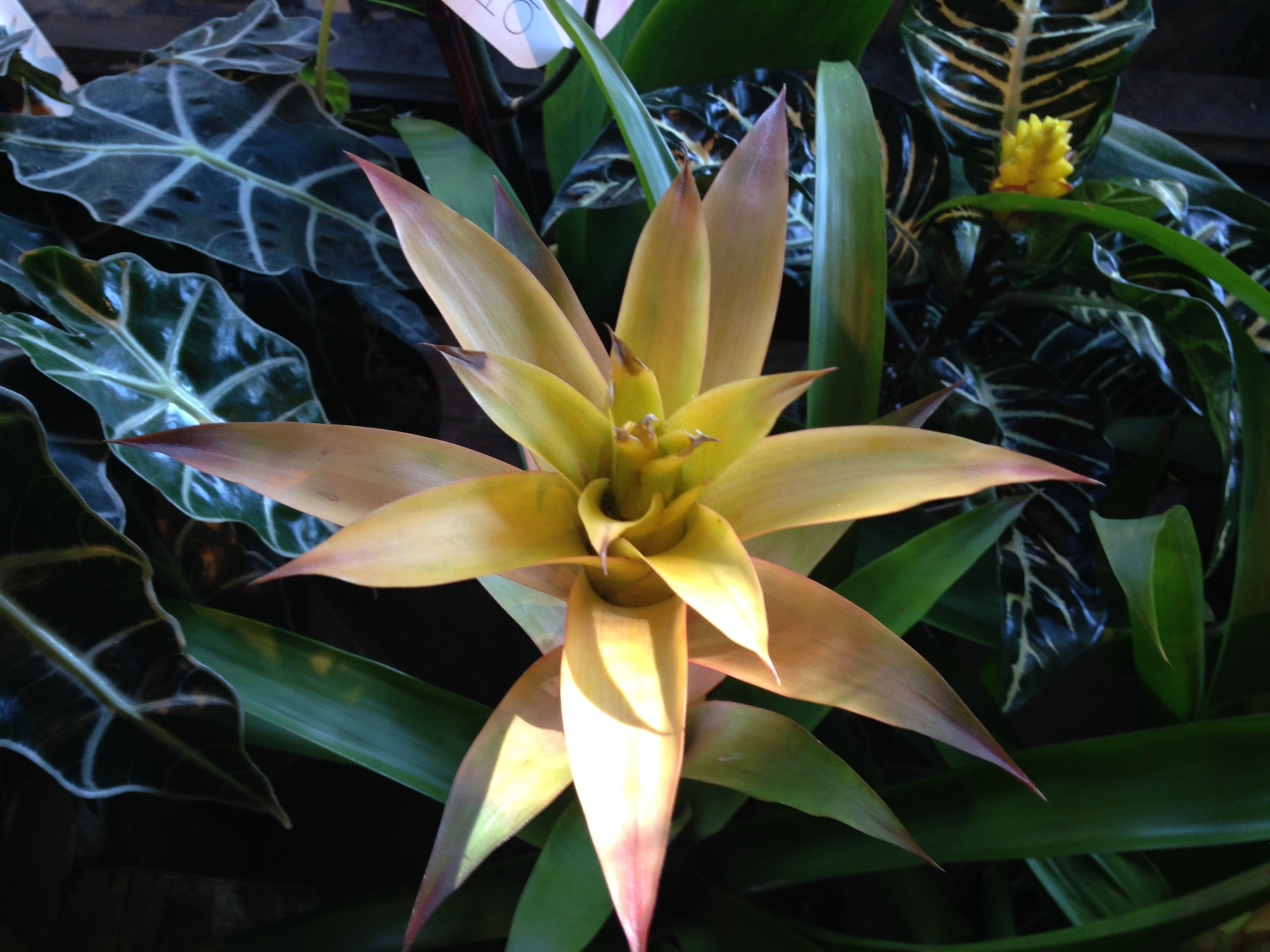 bromeliad website.jpg