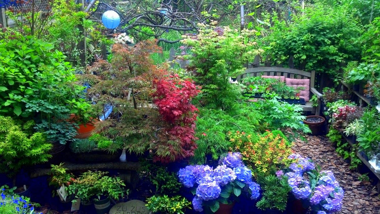 garden 5.2012.jpg