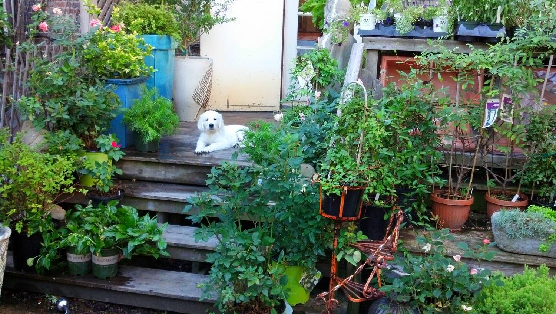 2012-07-25_08-31-10_157moose garden.jpg