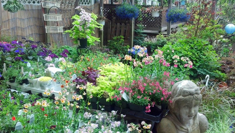 garden 5.7.12.jpg