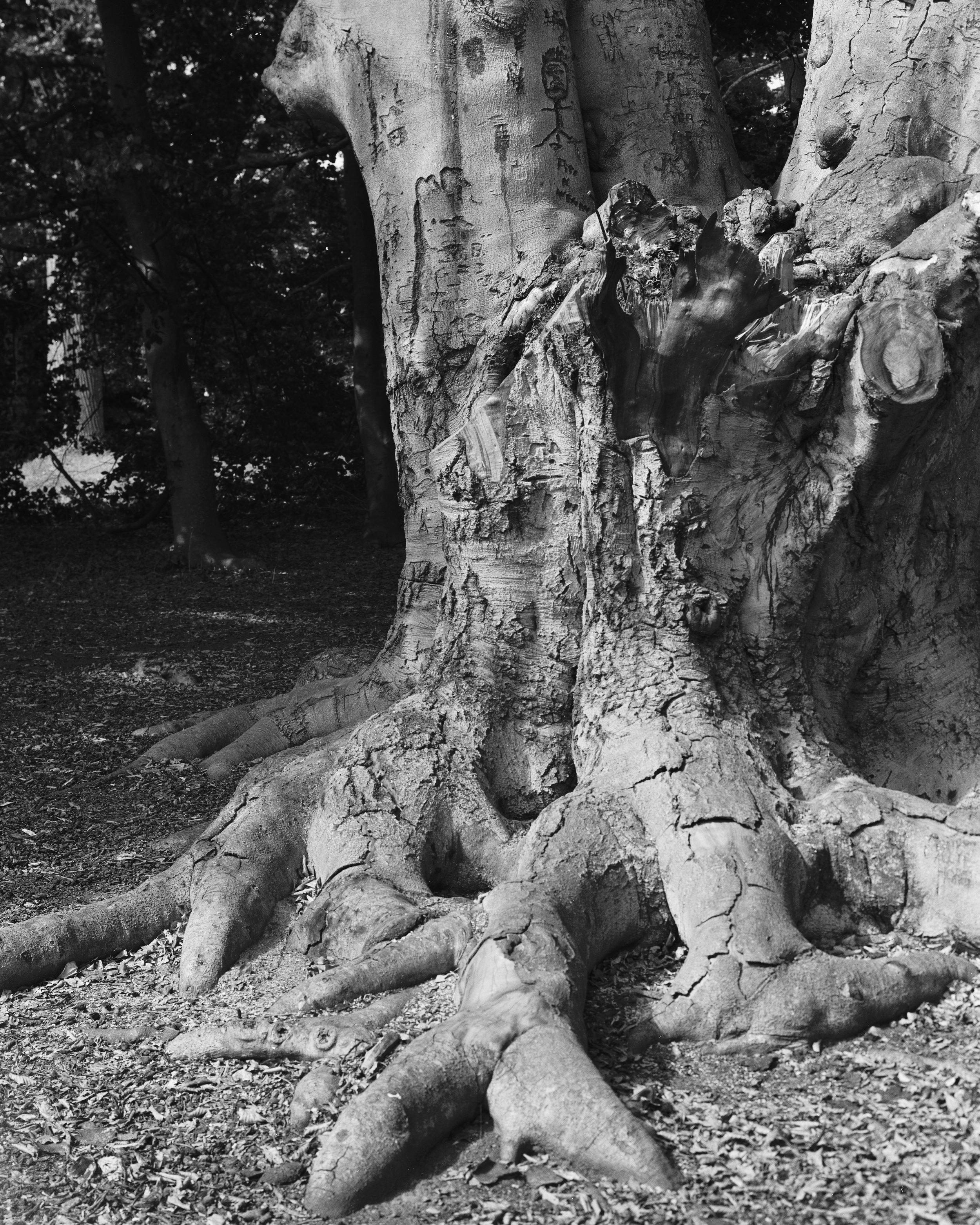 arboretum 3.jpg