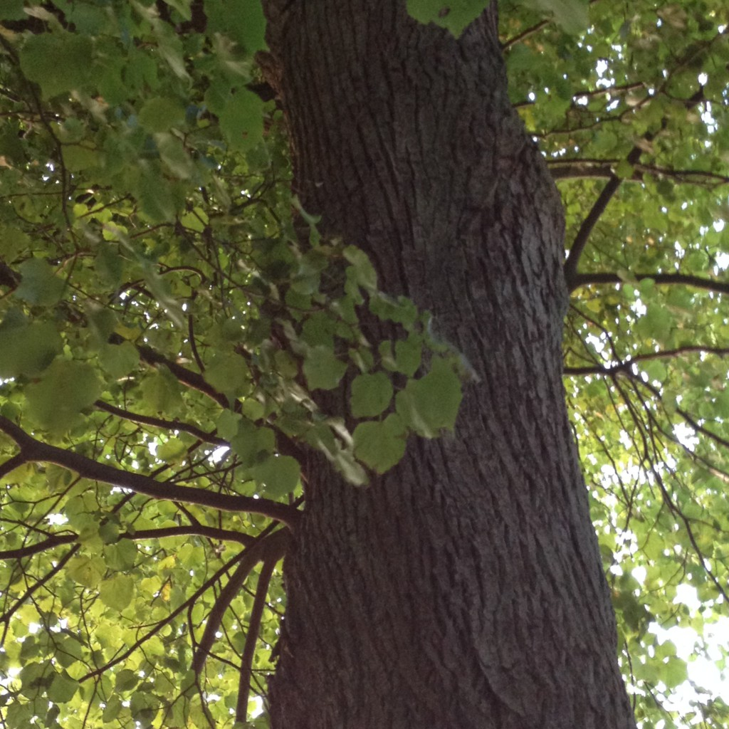 Look up - the self-compassion