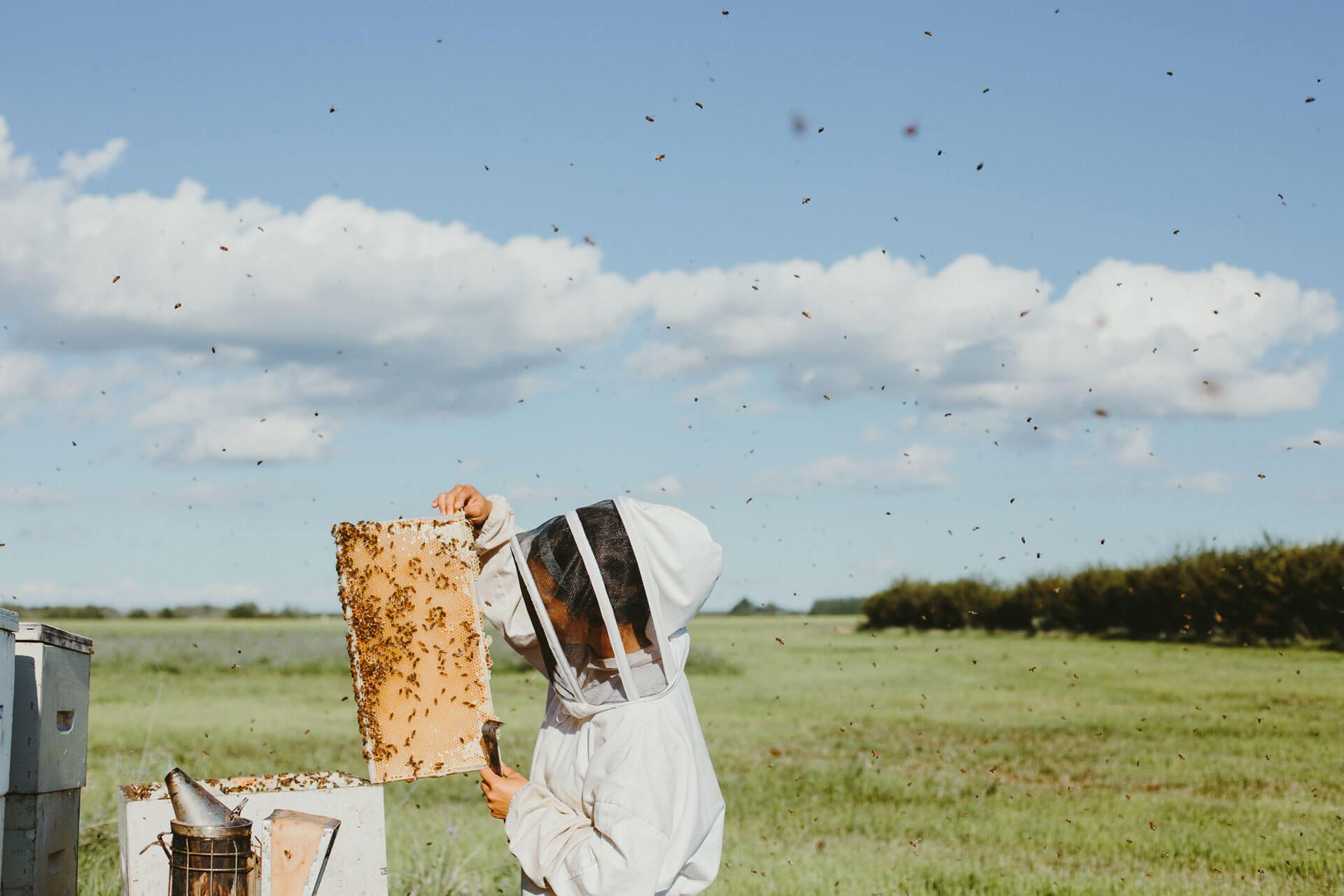 Our honey farm. Photo credit: Allison Seto.