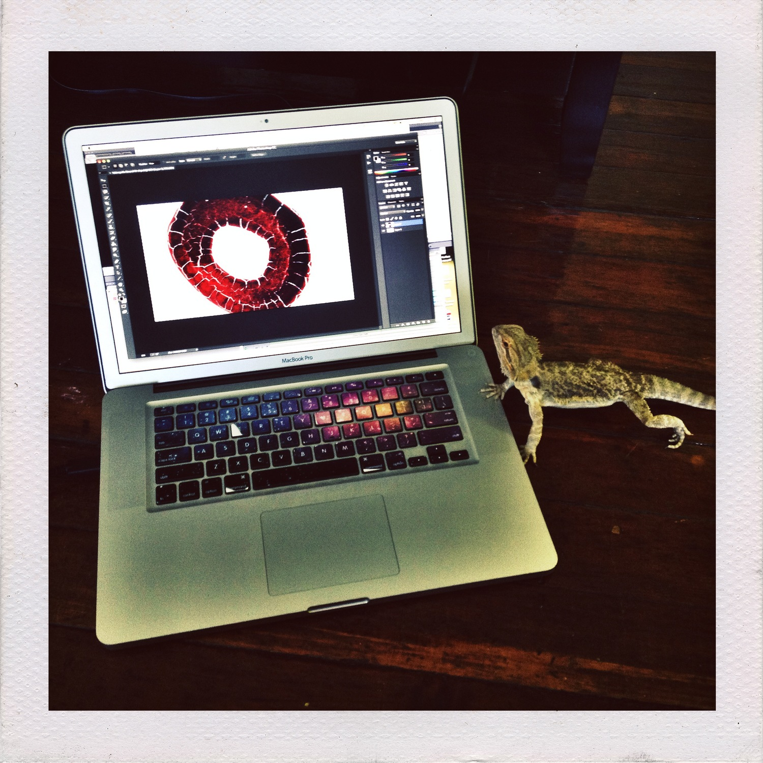 Being assisted by Quinn, Lara's bearded dragon,during post-production.