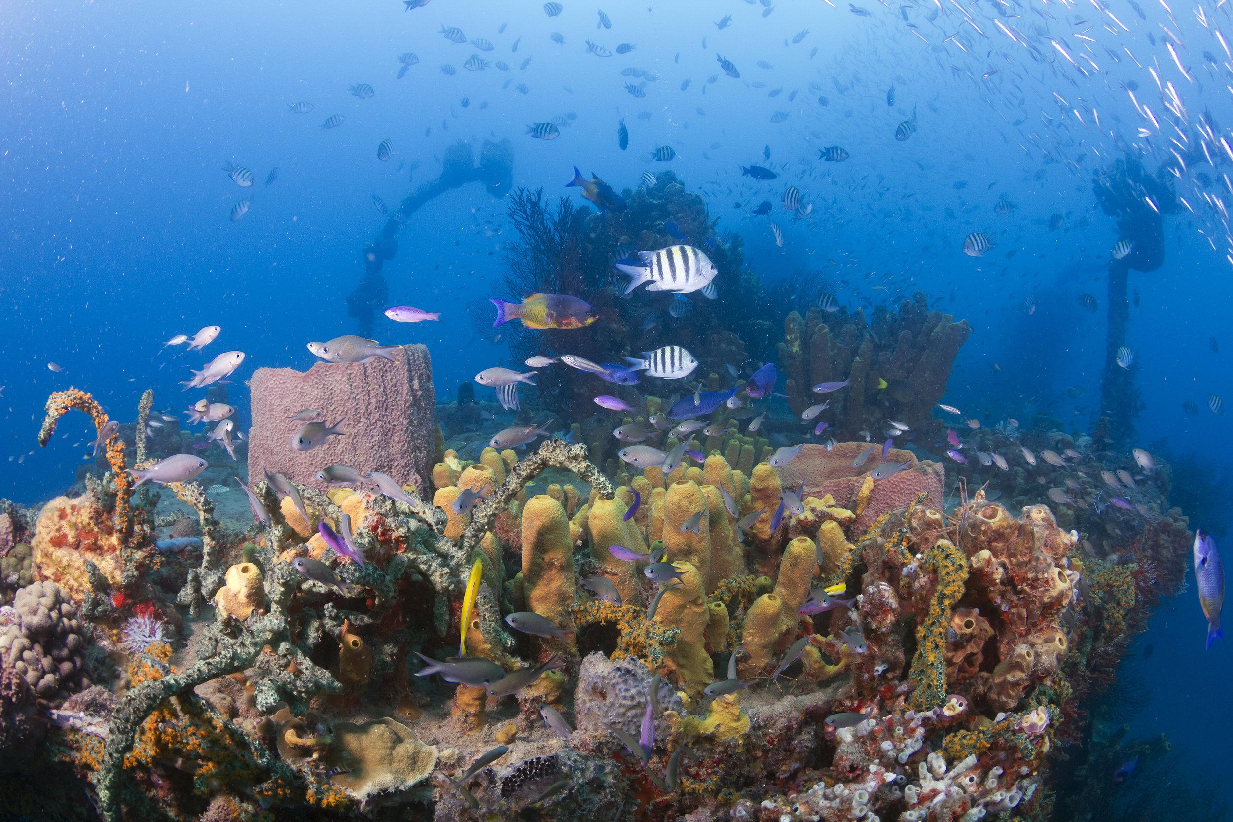 Ti Kaye Island Divers wreck dive 300m off shore.jpg