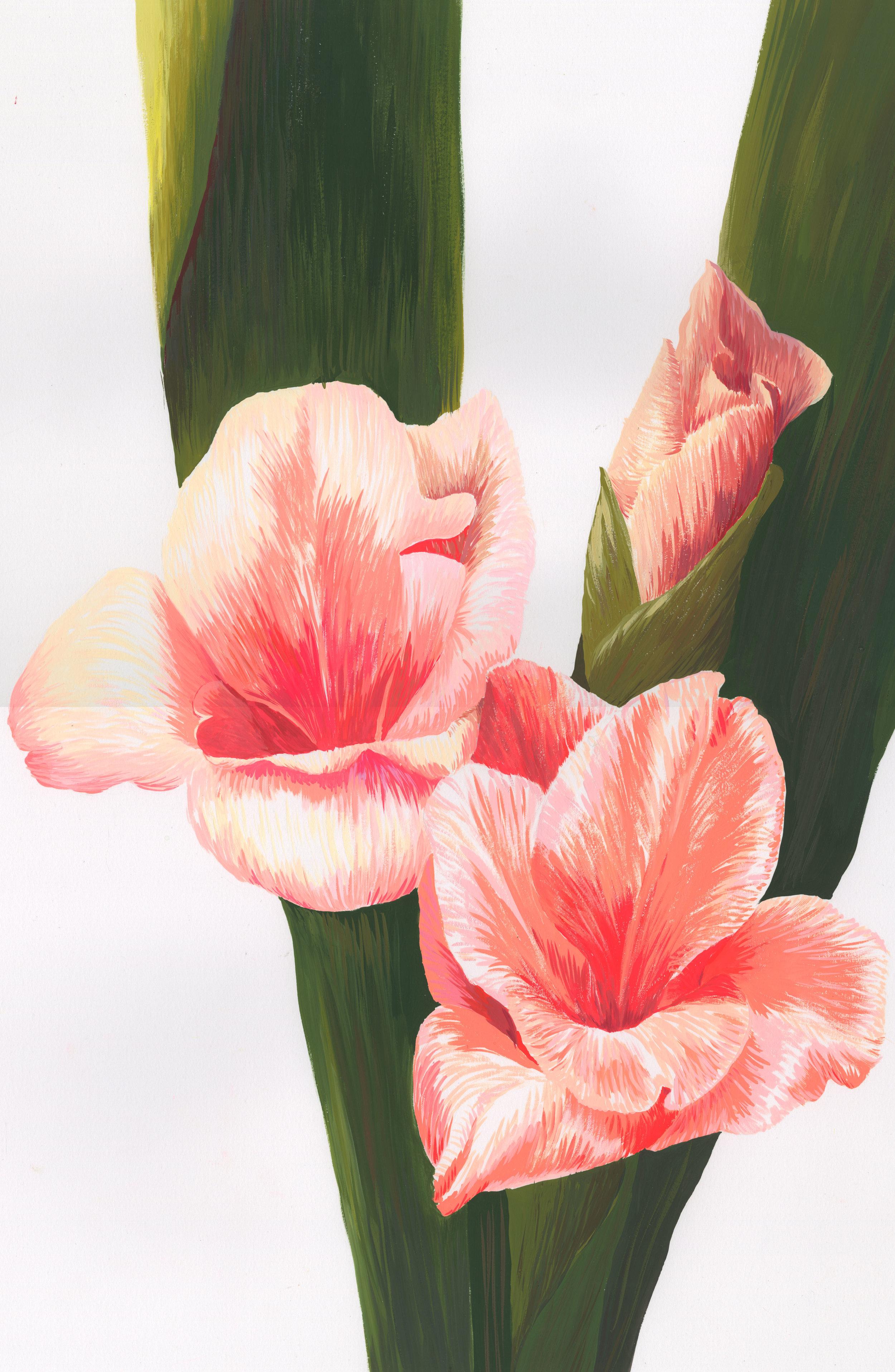 Gladiola Nature Study