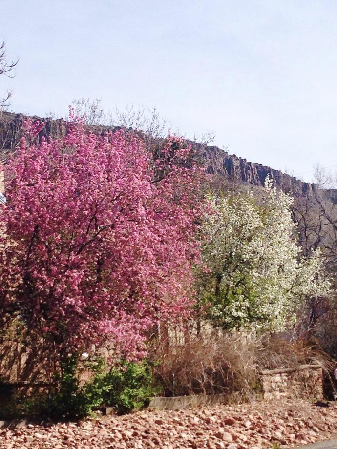 spring creek - this little joy