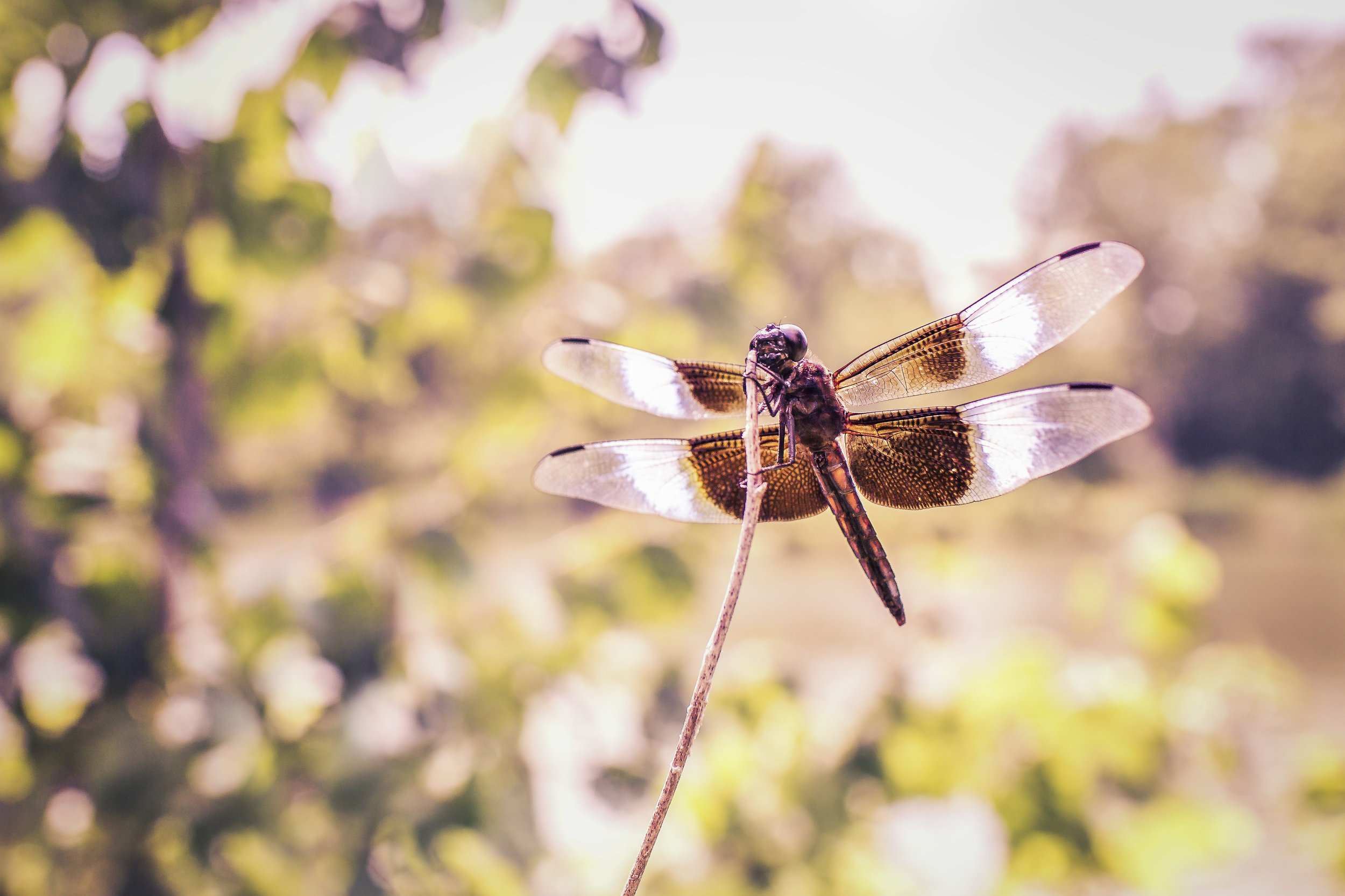 dragon-fly-landing-on-stem-waiting