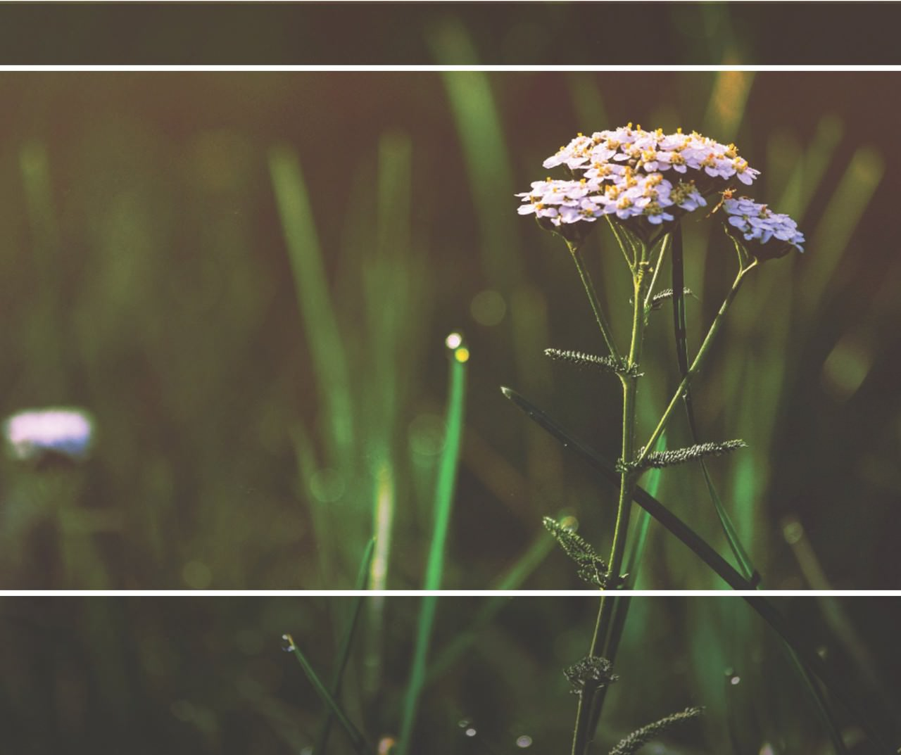 Earth Day-flowers.jpg