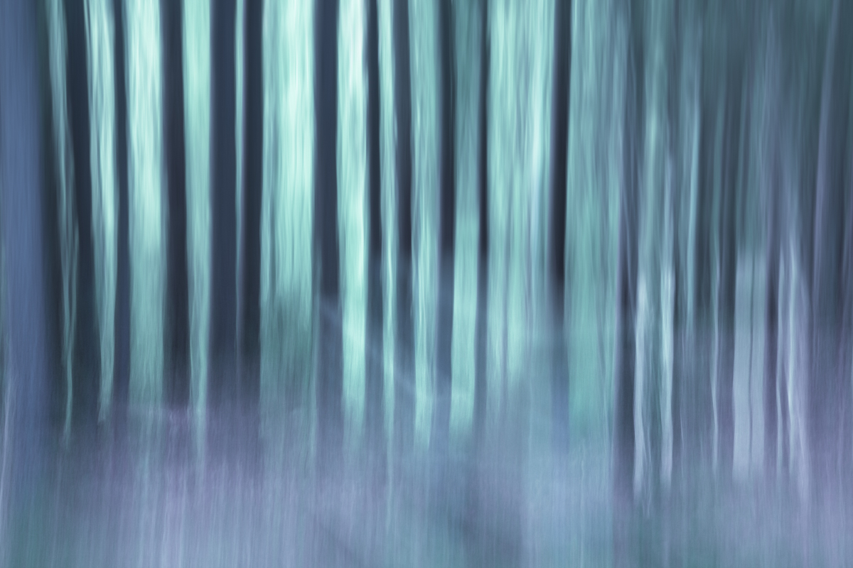 The Painted Woodland-2.jpg
