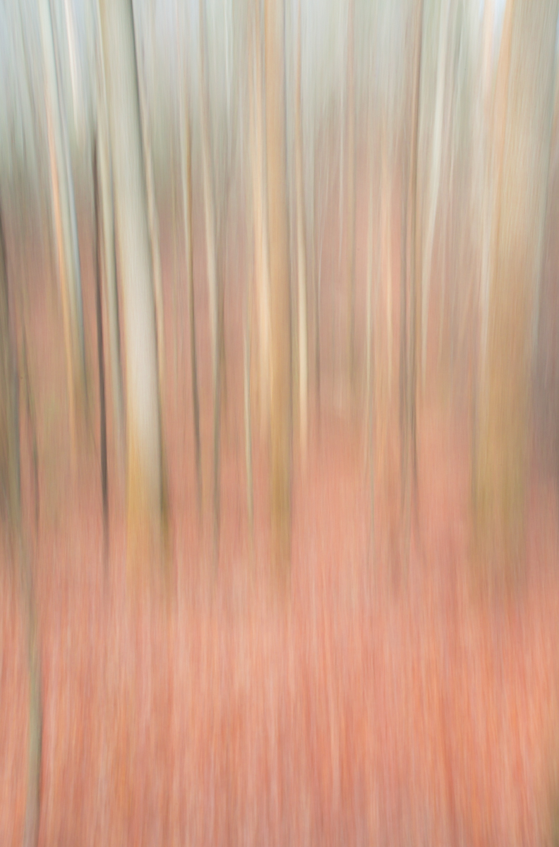 The Painted Woodland-6.jpg