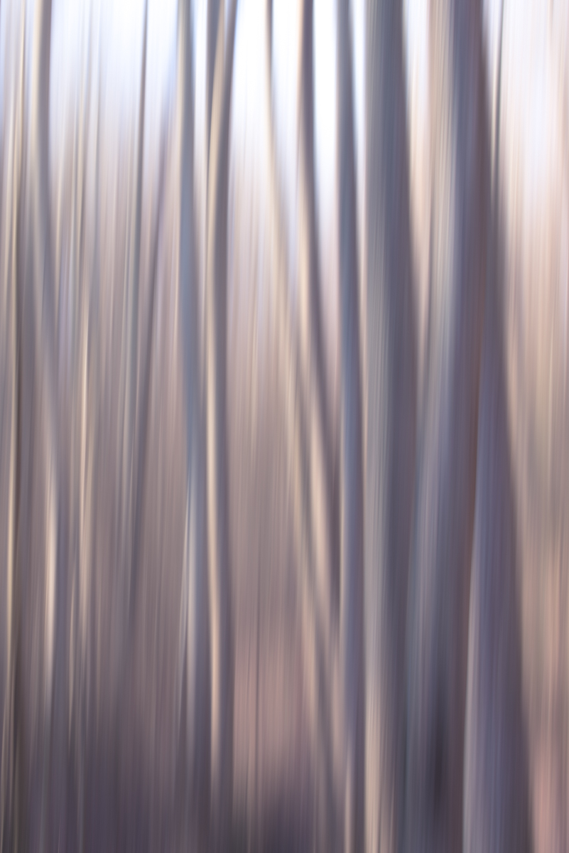 The Painted Woodland-9.jpg