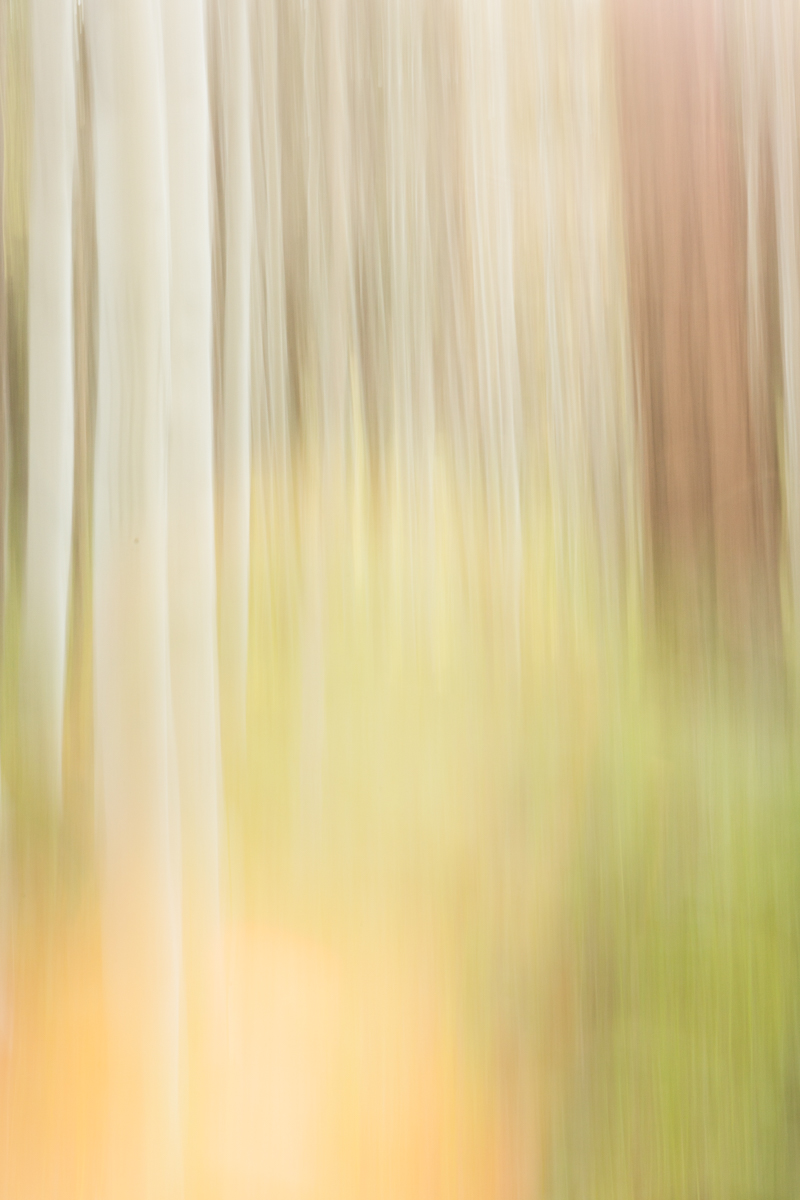 The Painted Woodland-12.jpg