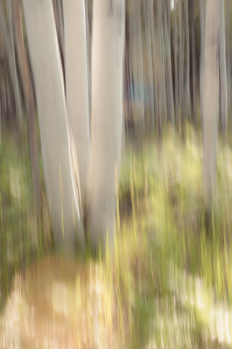 The Painted Woodland-13.jpg
