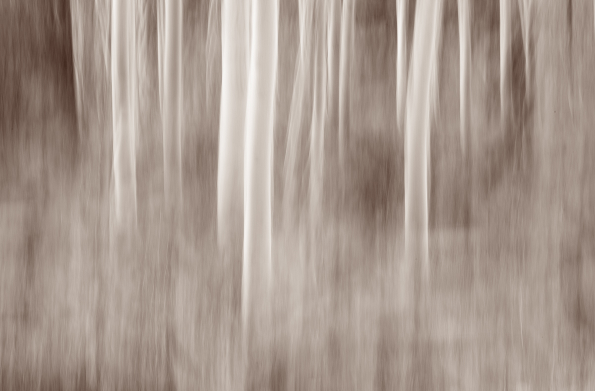 The Painted Woodland-16.jpg
