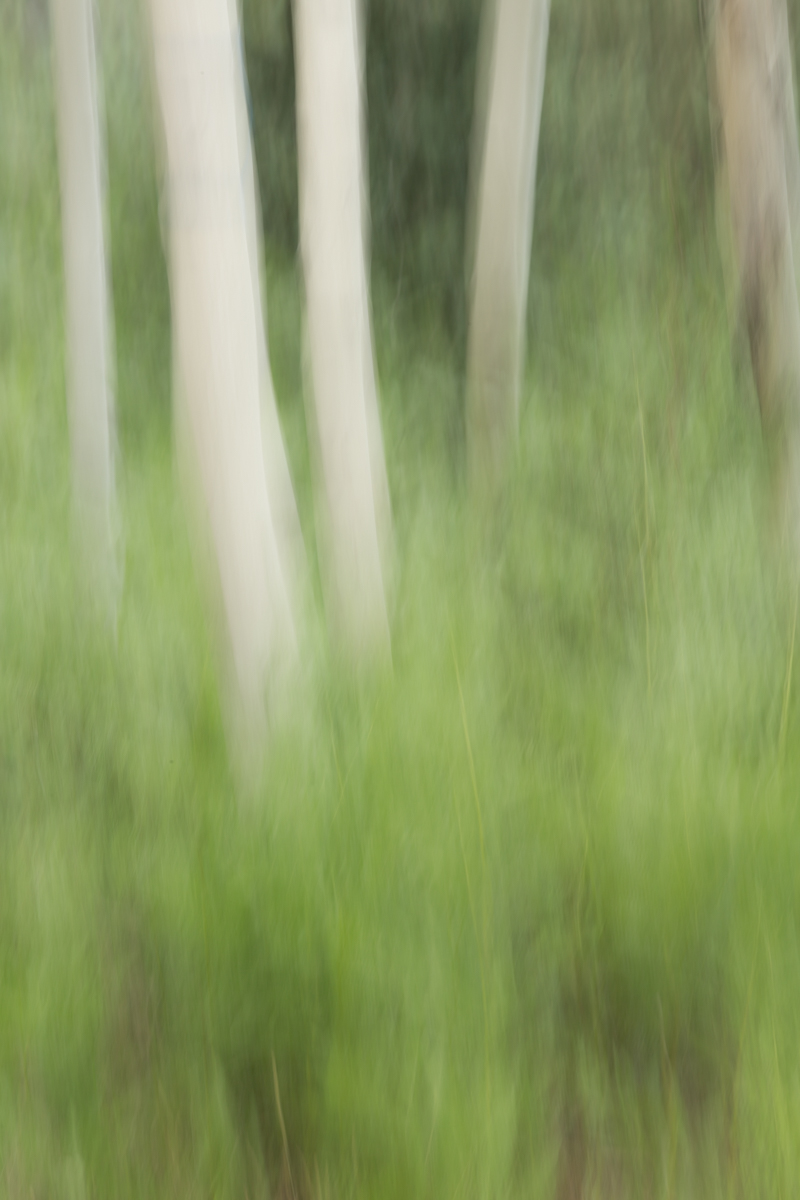 The Painted Woodland-17.jpg